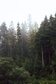 1/8 Pretty Trees