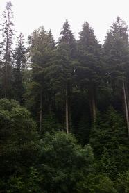2/8 Pretty Trees