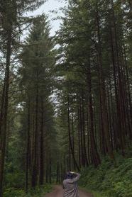 3/8 Pretty Trees