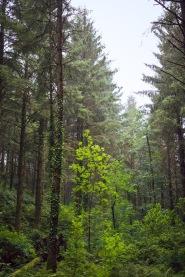 4/8 Pretty Trees