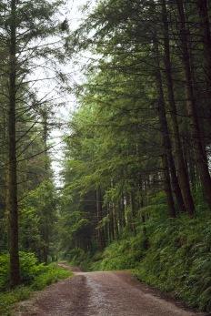 6/8 Pretty Trees